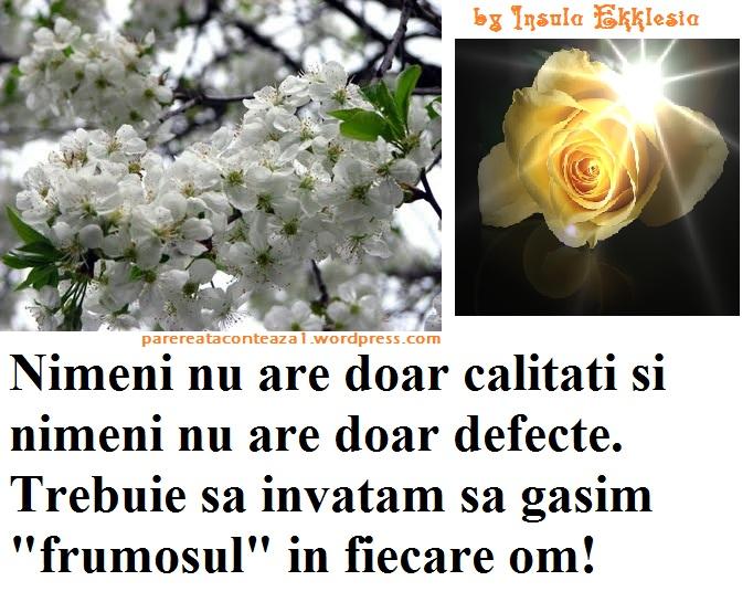 visin_inflorit