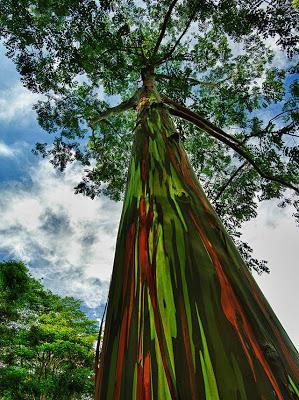 arborele 1