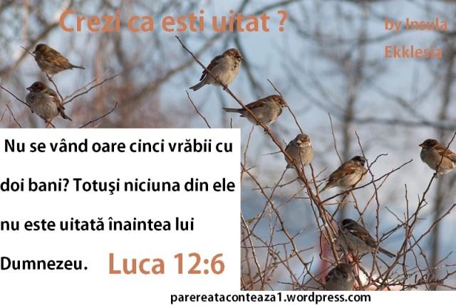 ma multe vrabii