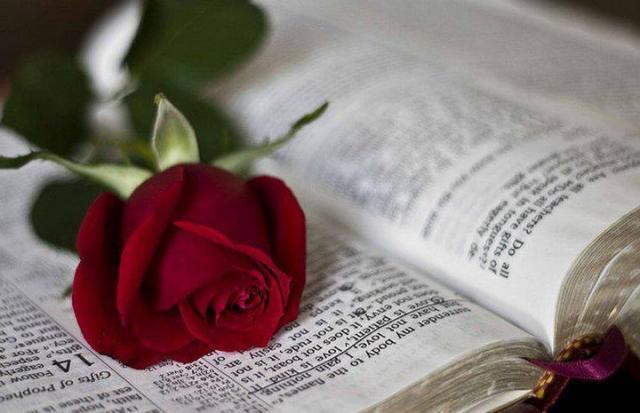 biblie si trandafir
