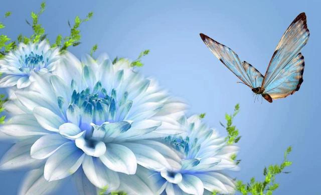 fluture imagine