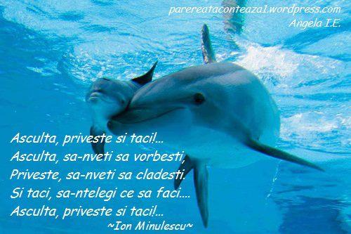 imagini delfini asculta